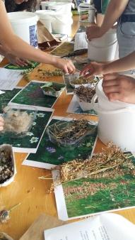 Les élèves choisissent les graines